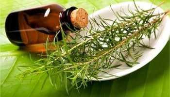 Способ применения эфирного масла чайного дерева