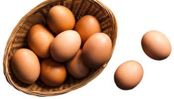 Яйцо польза вред употреблять