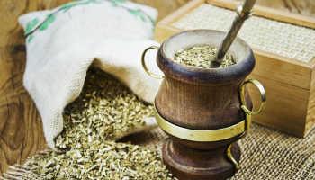 Чай матэ полезные свойства и противопоказания
