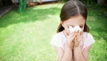 Аллергия на березу лечение