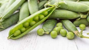 Свежий зеленый горошек польза и вред